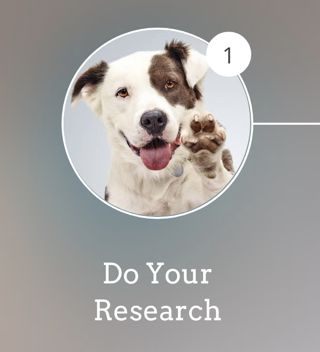 Pet Adoption Do Your Research