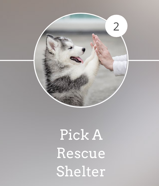 Find an Animal Shelter