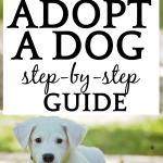 How To Adopt a Dog: Step-by-Step Guide