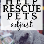 How To Help Rescue Pets Adjust To Their New Home