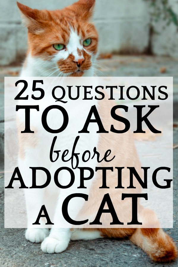 25 Questions To Ask Before Adopting a Cat