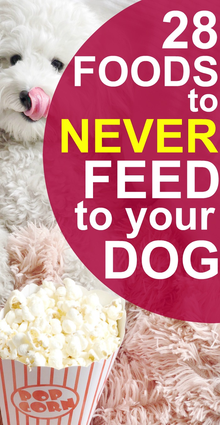 What Can Dogs NOT Eat and What Dogs CAN Eat text over the image of a white poodle licking lips in front of a bowl of popcorn