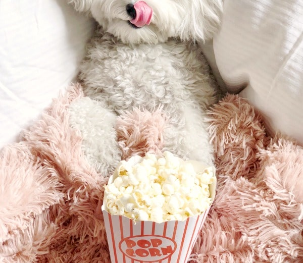 What Can Dogs NOT Eat white poodle in front of popcorn licking lips